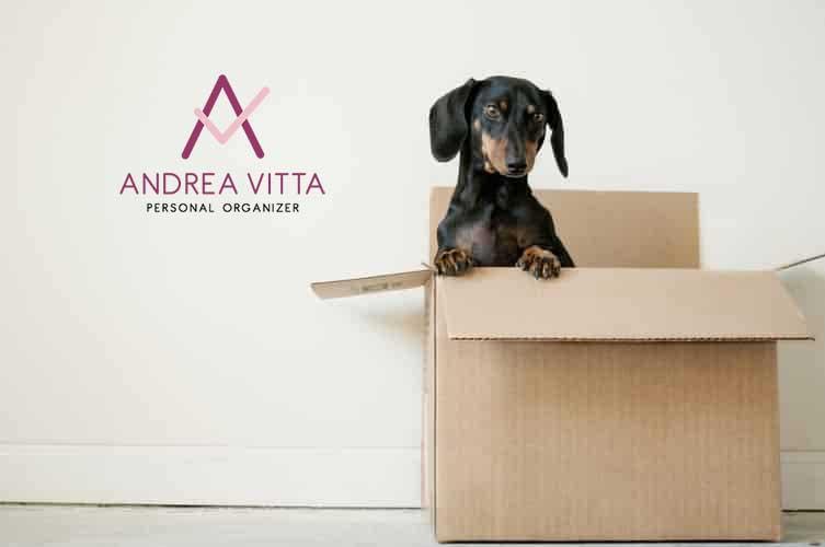 Organização Pós Mudança com Andrea Vitta